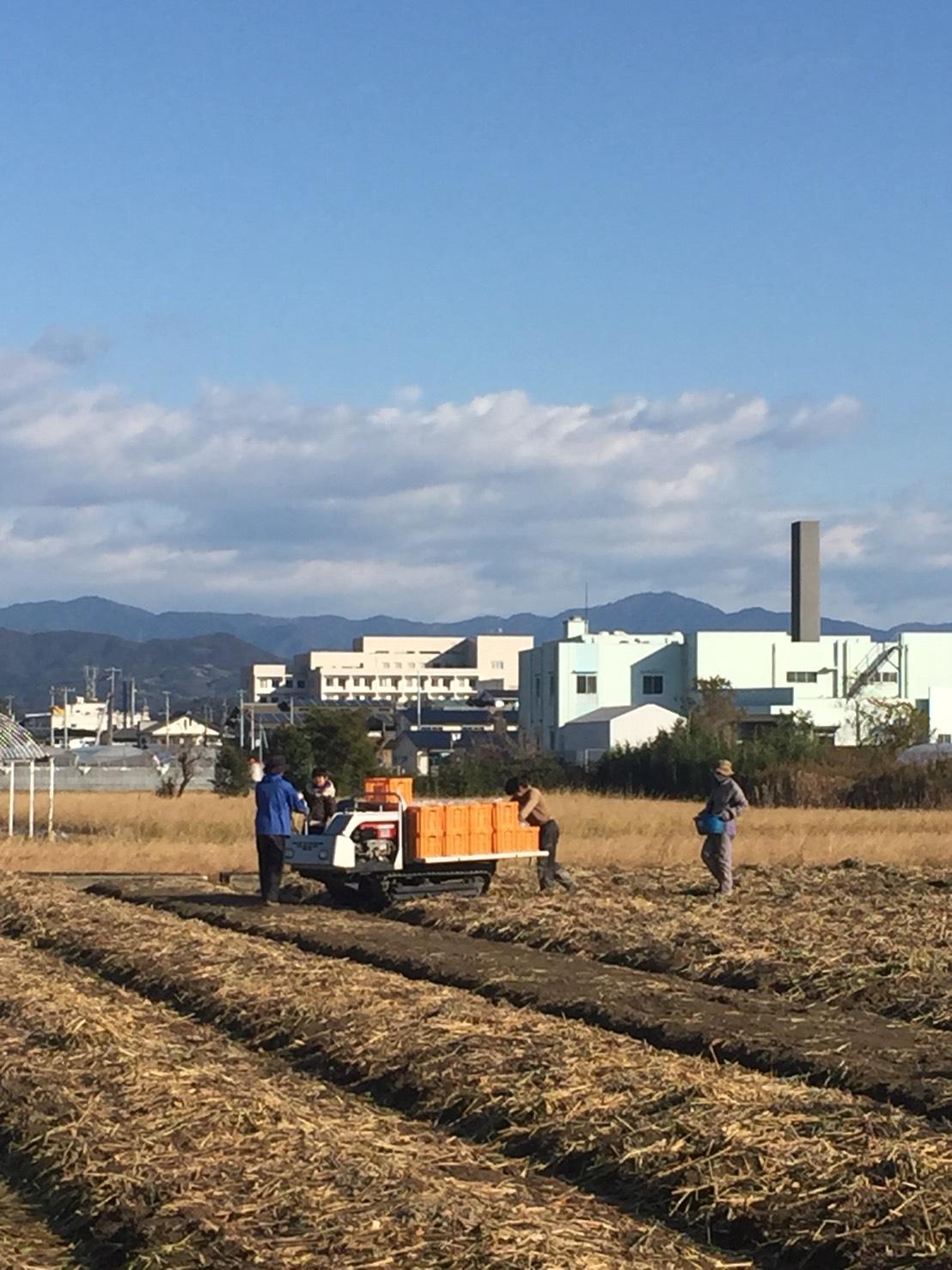 生姜掘り終了