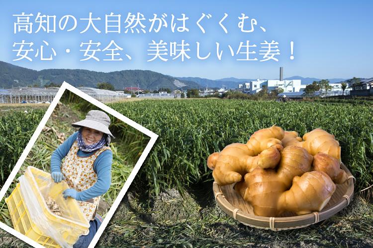 生姜畑の風景