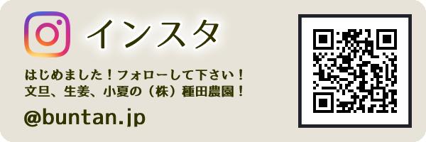 インスタグラムはじめました。フォローして下さい!文旦、生姜、小夏の(株)種田農園 @buntan.jp