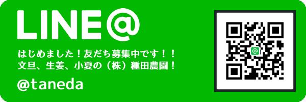 LINE@はじめました。友だち募集中です。文旦、生姜、小夏の株式会社種田農園 @taneda
